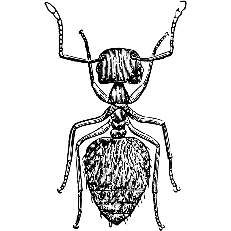 insects ant - Certified Pest Control