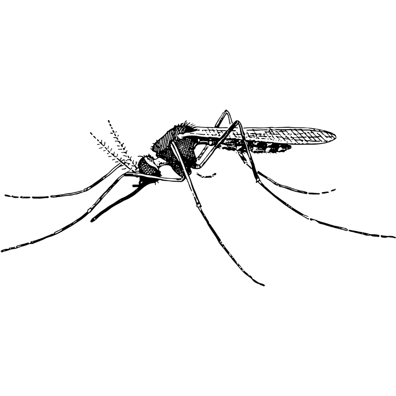 insects mosquito - Certified Pest Control