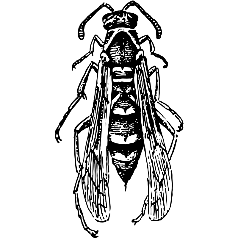 insects paper wasp - Certified Pest Control