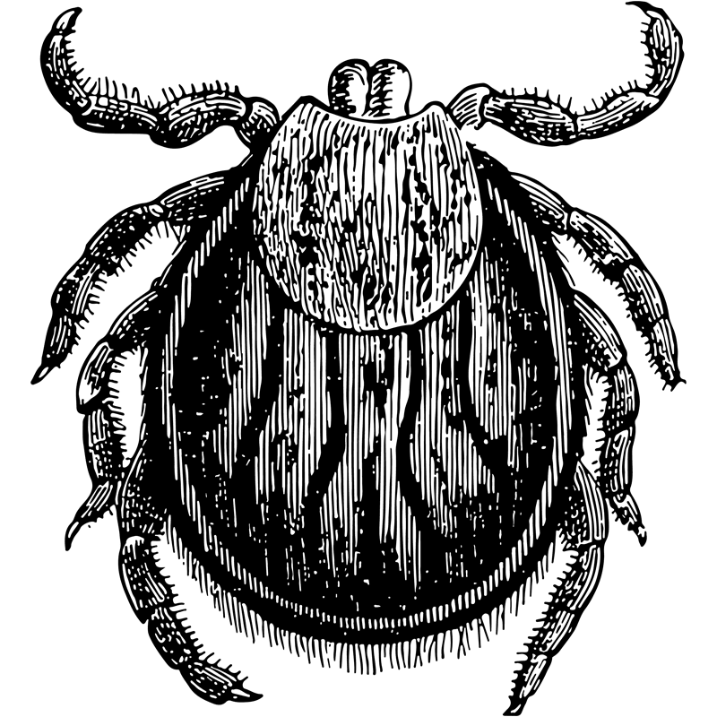 insects tick - Certified Pest Control