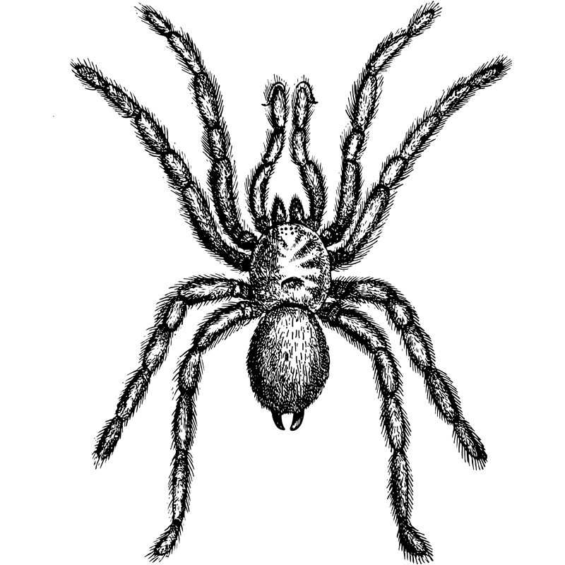 insects trap door spider - Certified Pest Control