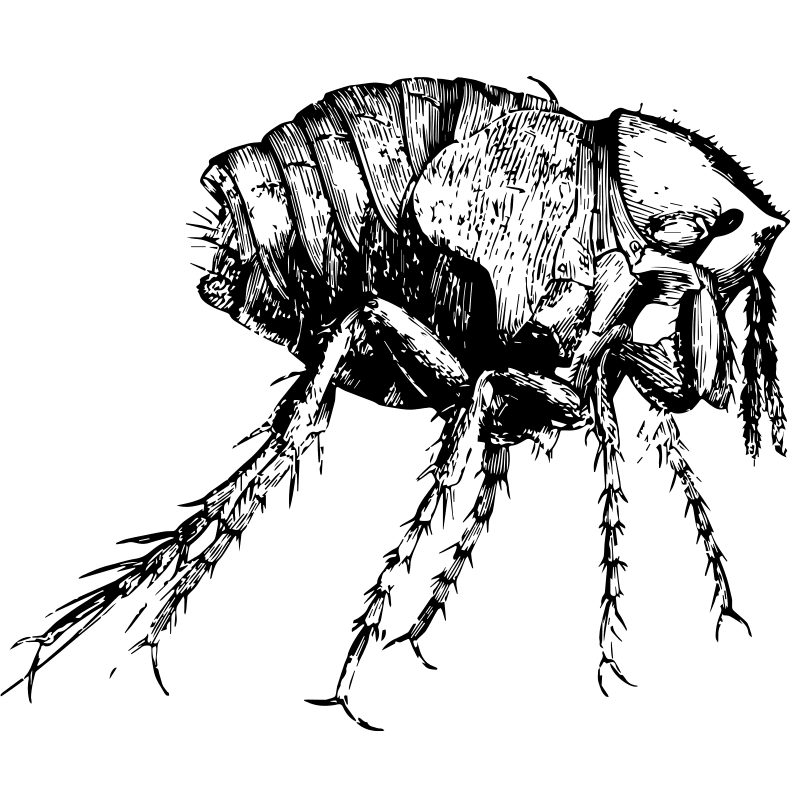insects chigger - Certified Pest Control